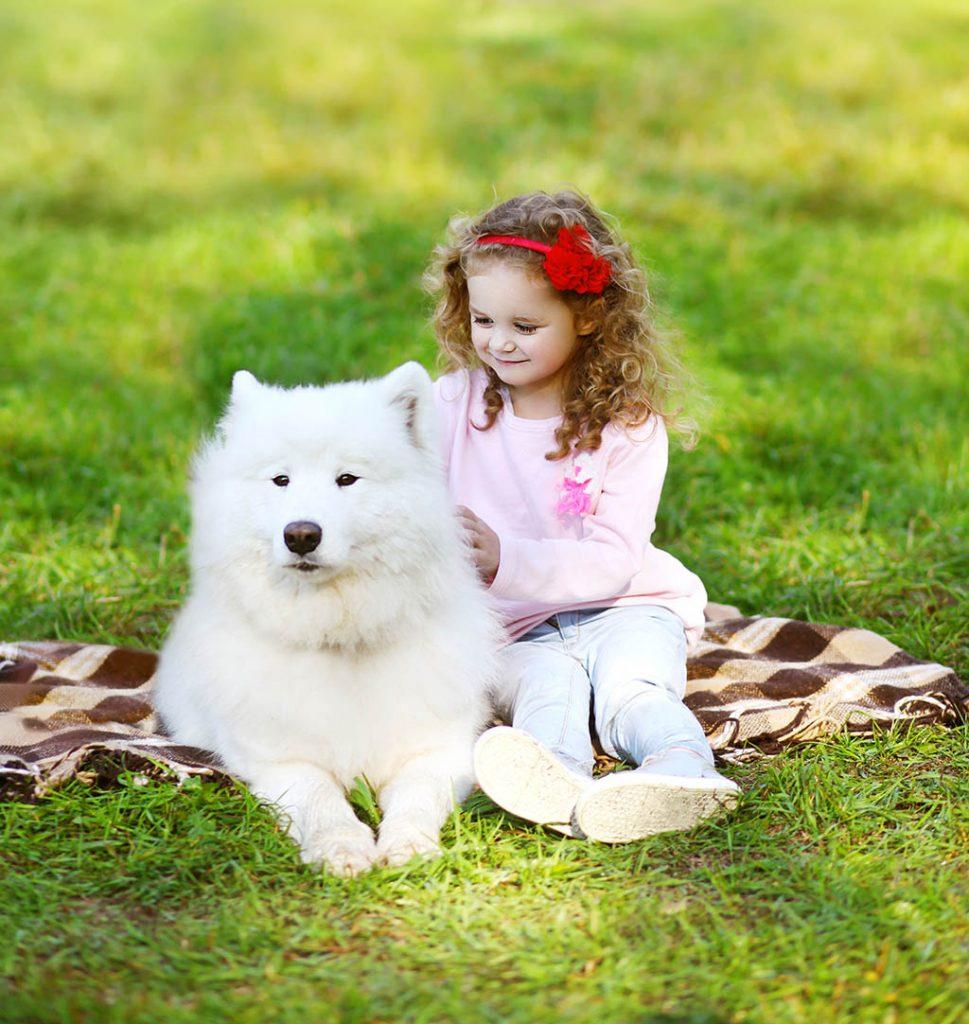 Familienhund Samojede mit Kind
